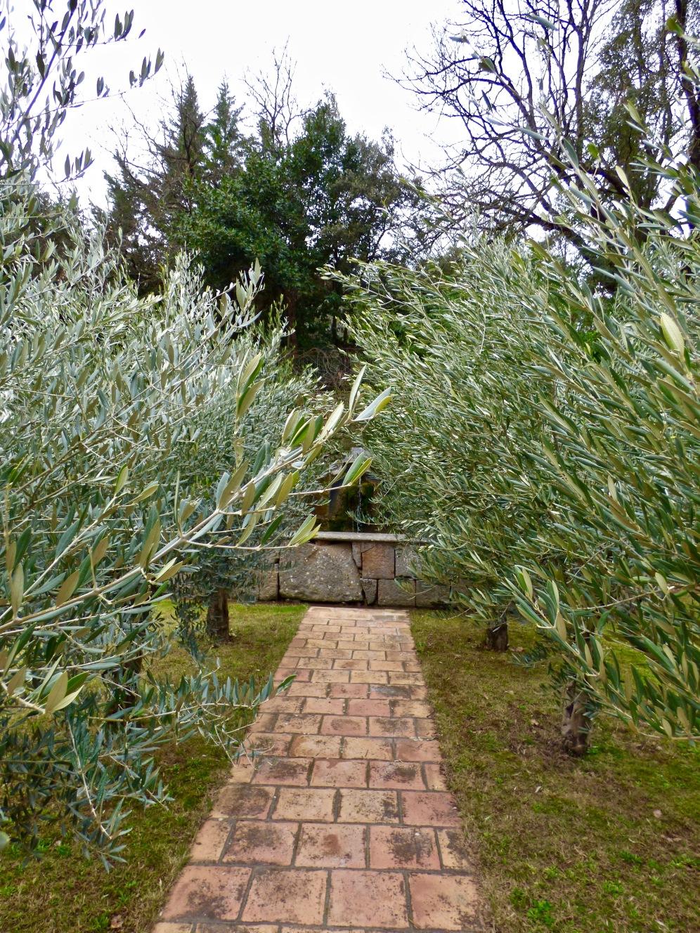 Le bassin et les oliviers ©lepetitlugourmand