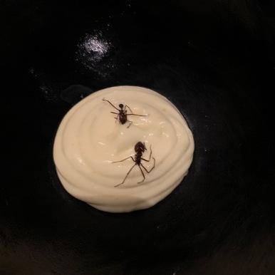 Fine mousse de manioc aux fourmis Saúva ©lepetitlugourmand